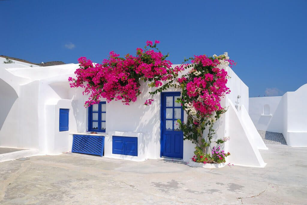Flori de boungainvillea - Santorini