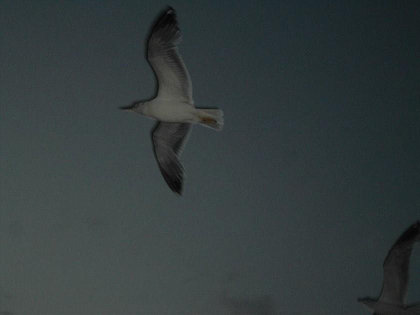 Insula Thassos - transfer feribot insotit de perscarusi