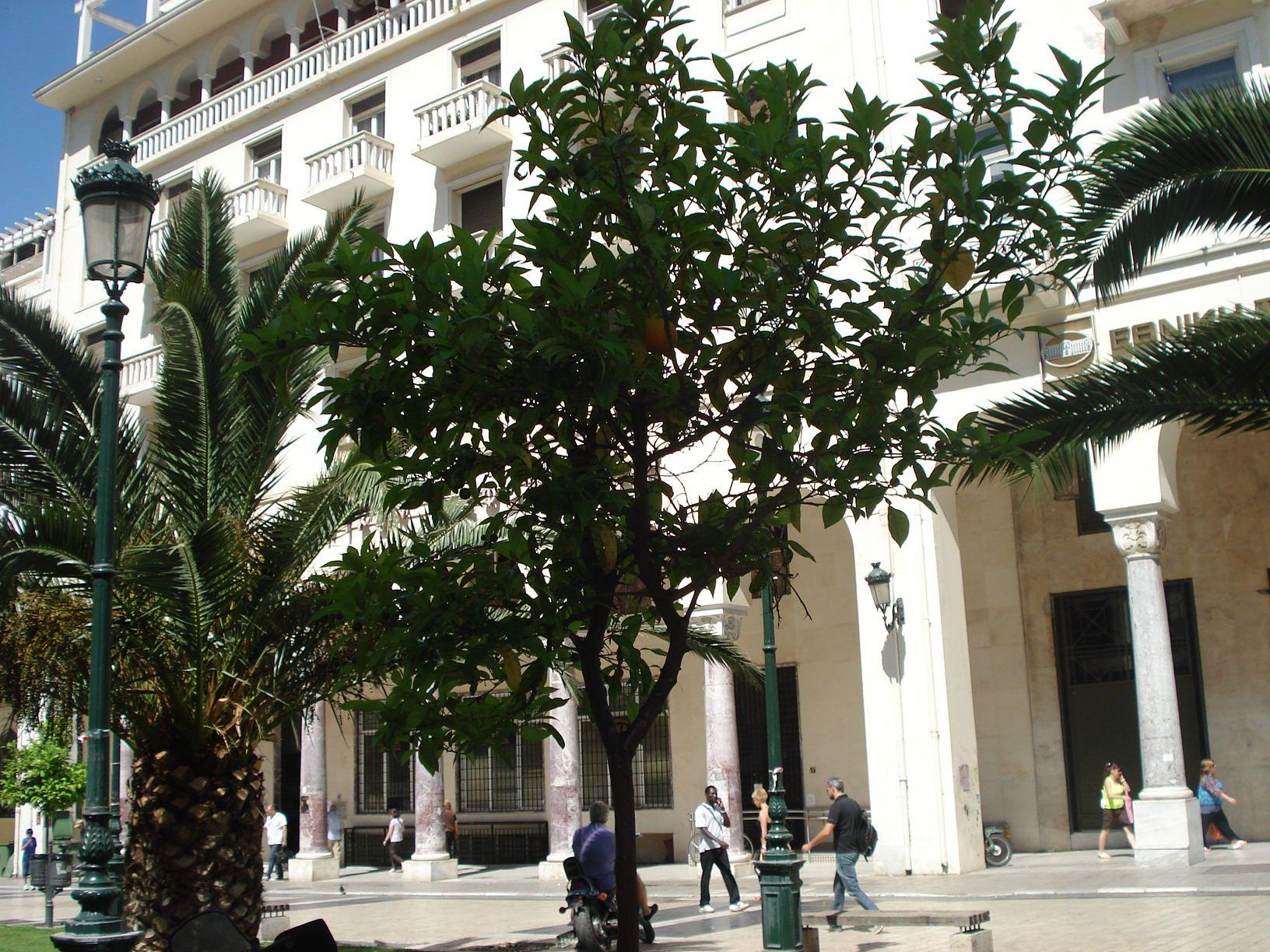 Salonic 13