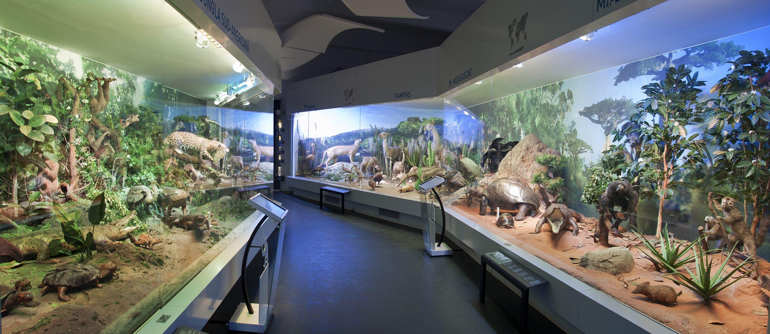 Muzeul Grigore Antipa - Bucuresti
