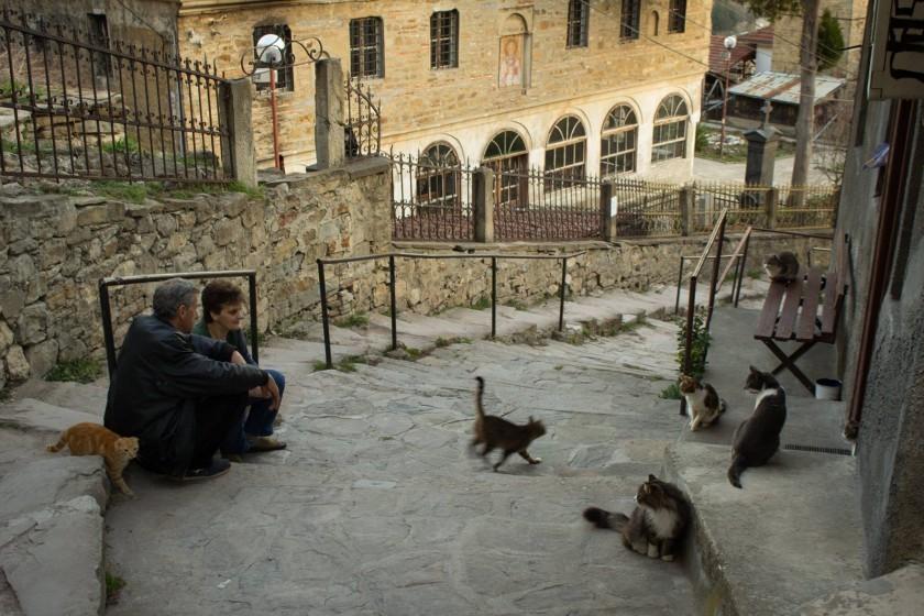 Veliko Tarnovo - orasul pisicilor tolanite la soare