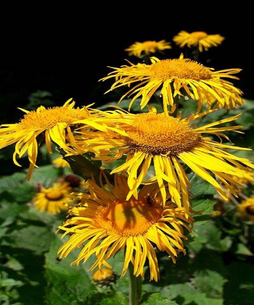 Flora de pe traseul catre Valea Spumoasa